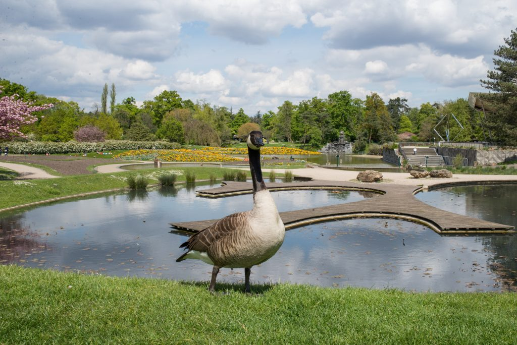 canard parc floral vincennes
