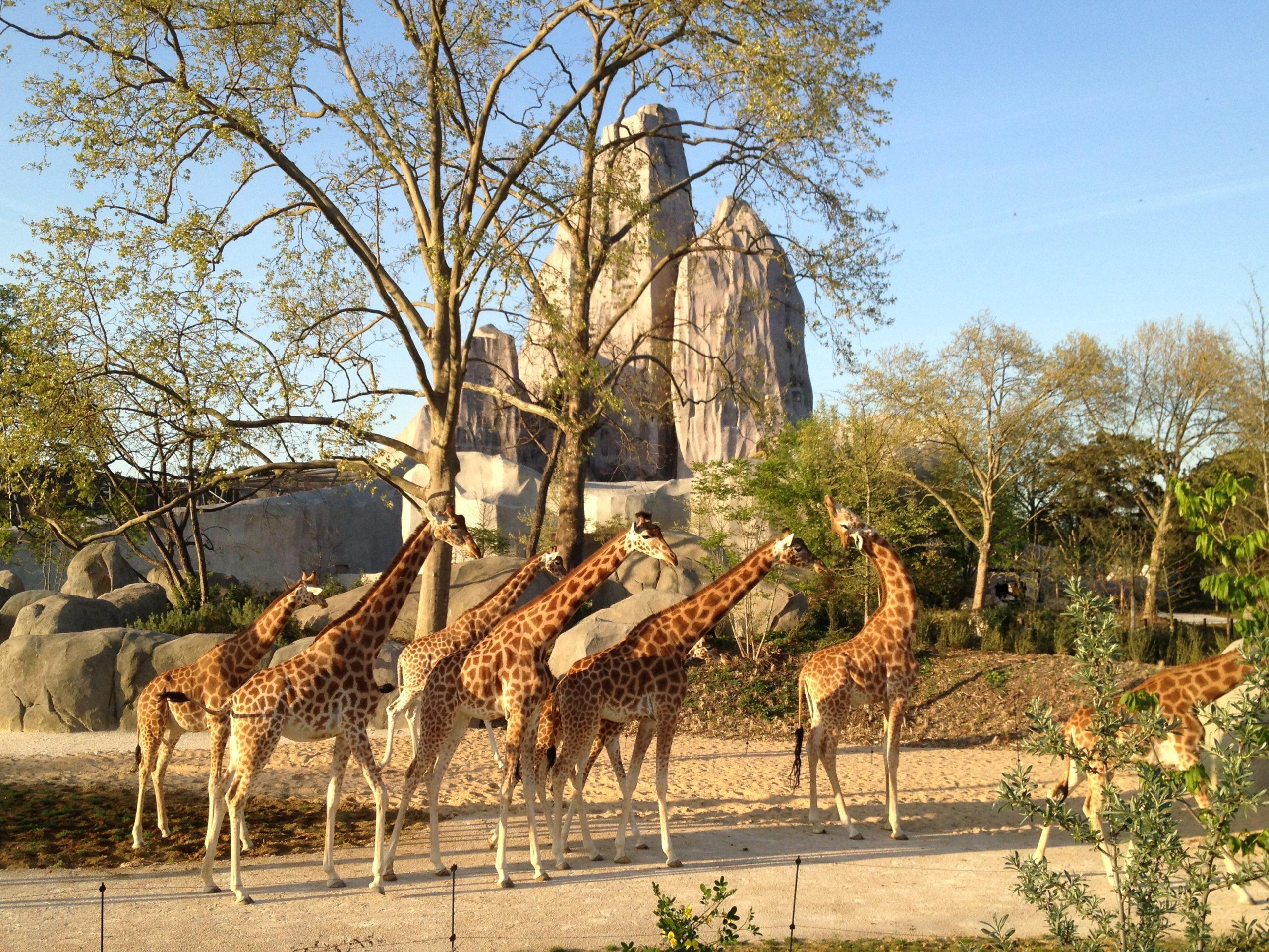 Le Zoo De Vincennes Un Incontournable Destination Vincennes