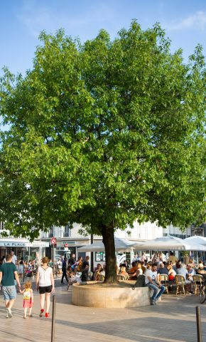 place arbre vincennes